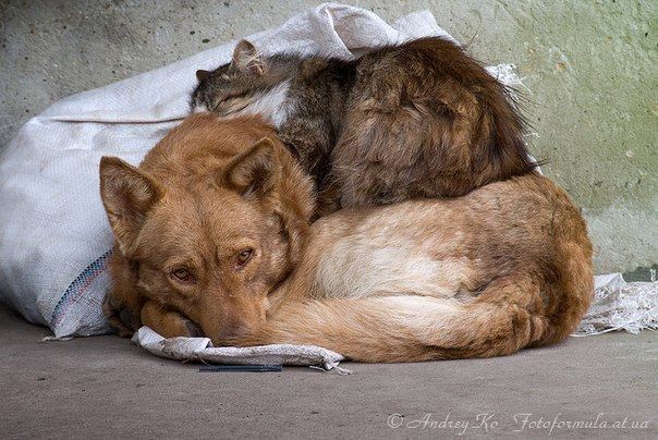 Бездомные друзья.