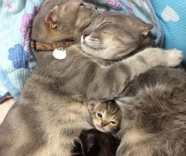 Дружная семейка.