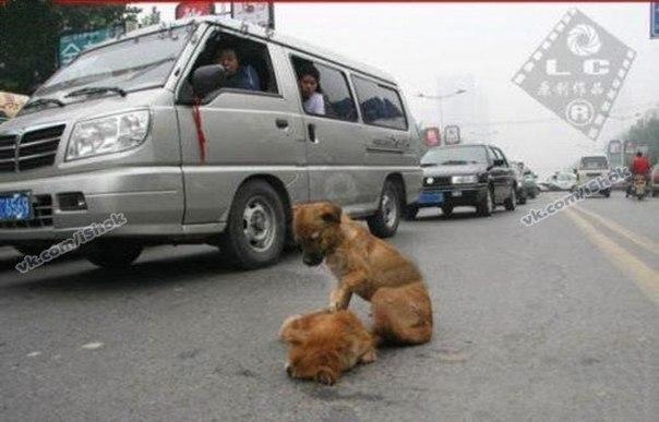 Два щенка в г. Бангкок Тайланд перебегали дорогу. Одного ще
