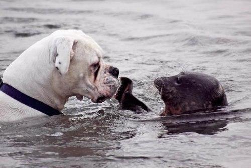 Этот пес был шокирован, когда игривый тюлень слегка дал ем