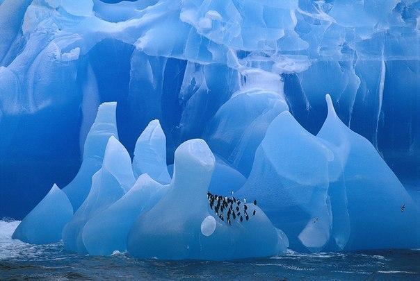 Frans Lanting, автор фото: «Эту стаю пингвинов на айсберге я фото