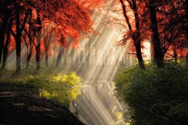 Игра света в лесу в окрестностях Амстердама