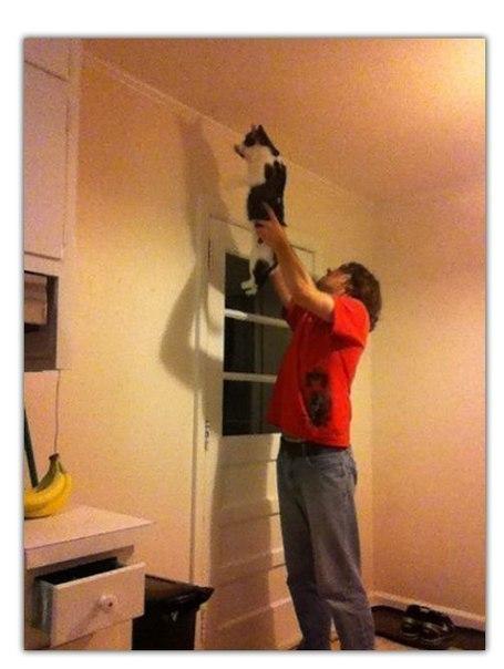 Как я убираю пауков с потолка