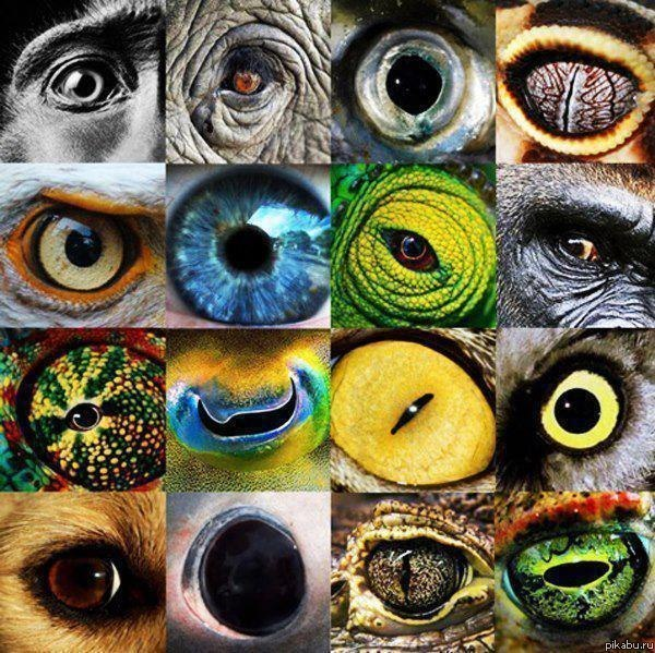 Какими глазами смотрит Природа.