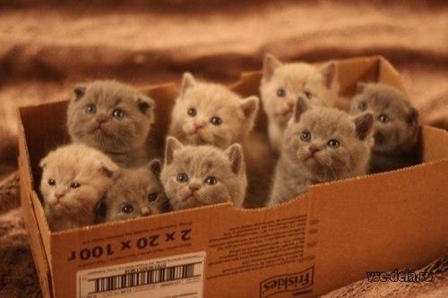 Коробка счастья.