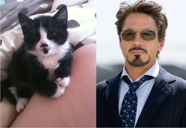 Кошка Тони