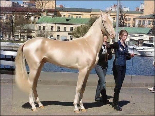 Кремовая лошадь