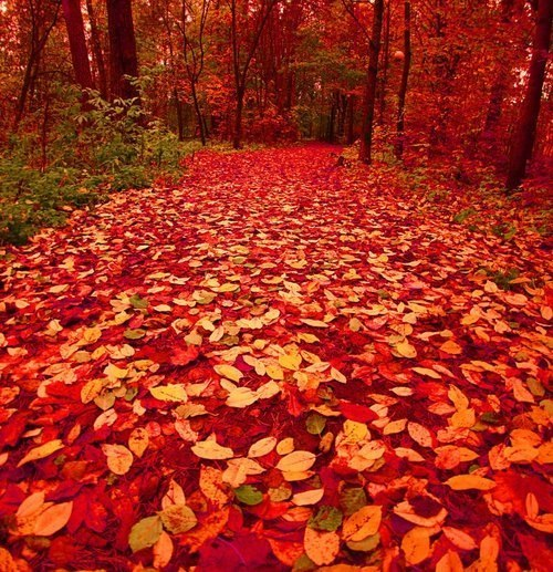 Лесная дорожка, осень. Финляндия