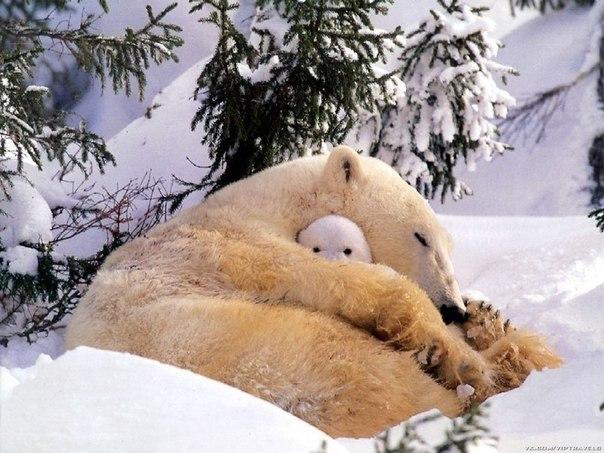 Медвежонок охраняет сон мамы...