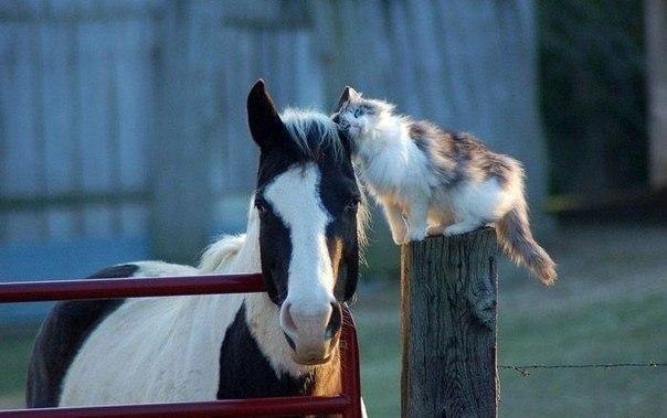 Необычная любовь