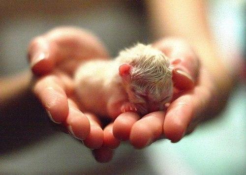 Новорожденный котенок...