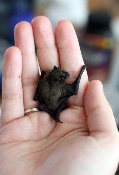 Объятия летучей мыши.