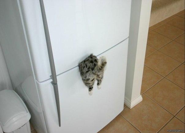 Очень необычная идея магнитика на холодильник.