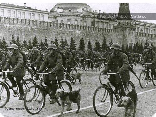Почему на Параде Победы 24 июня 1945 года одну собаку несли на