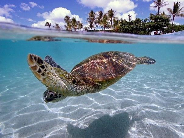 Под водой, на острове Бора-Бора.