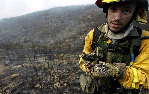Пожарный несет совенка, спасенного из лесного пожара в Вал