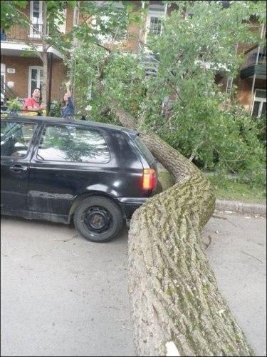 Радующий изгиб упавшего дерева.