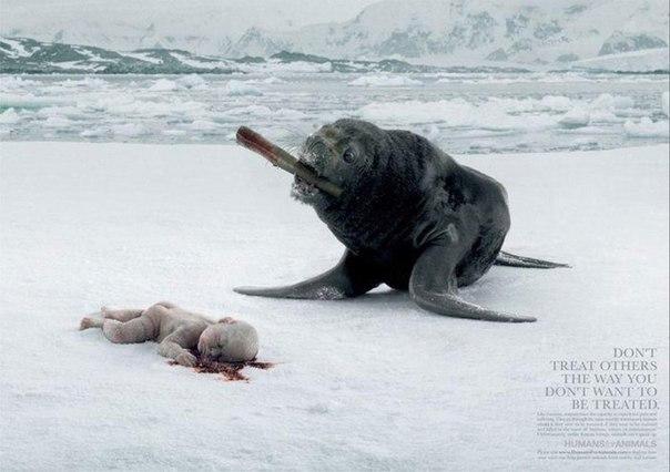Реклама против убийства животных: