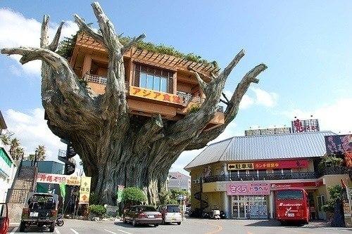 Ресторан на дереве, остров Окинава.