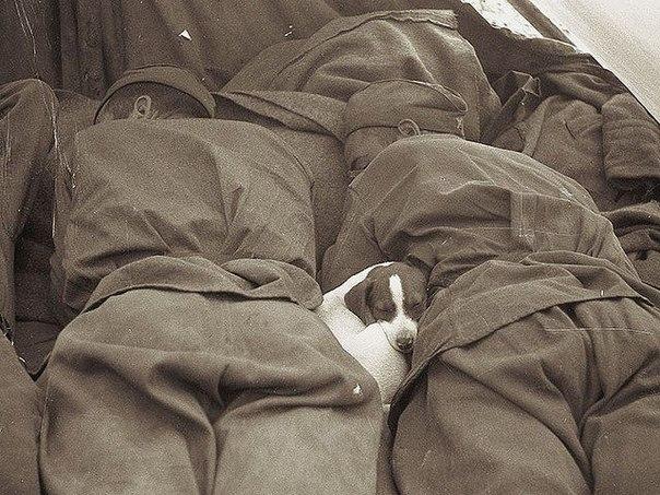 Русские солдаты спят с щенком. Прага, 1945 год