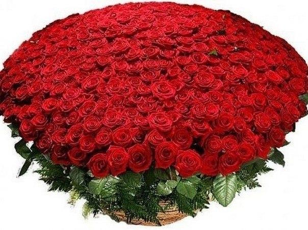 Самый большой букет цветов содержал 13 777 роз.