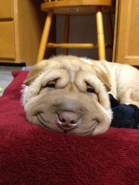 Самый добродушный пёс.