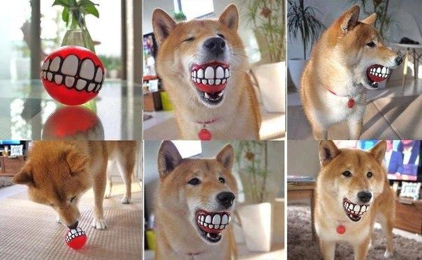Самый крутой мячик для собак :)