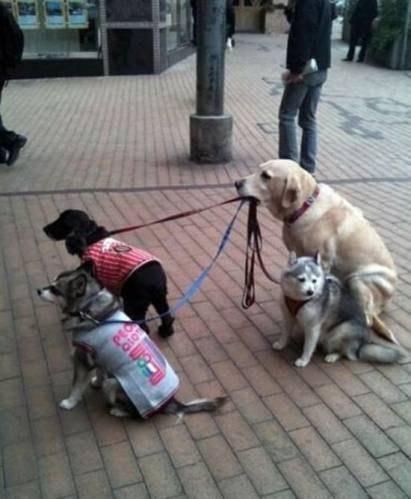 Самый ответственный пес=)