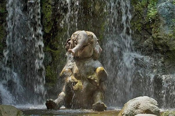 Слоненок принимает душ жарким утром