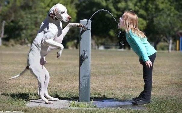 Собака - самый верный друг человека.