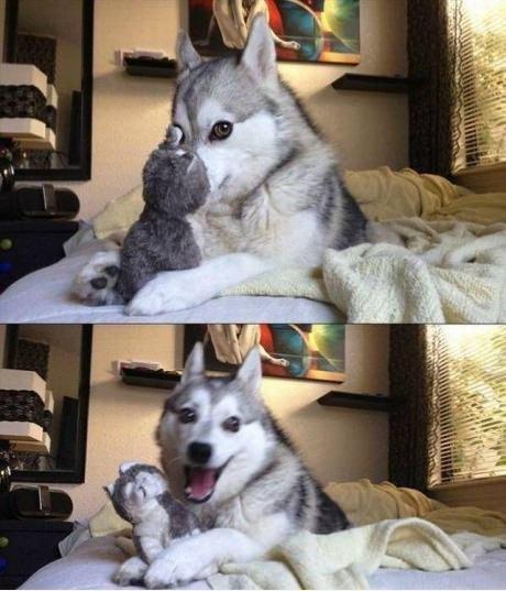 Собаки тоже бывают милыми няшками