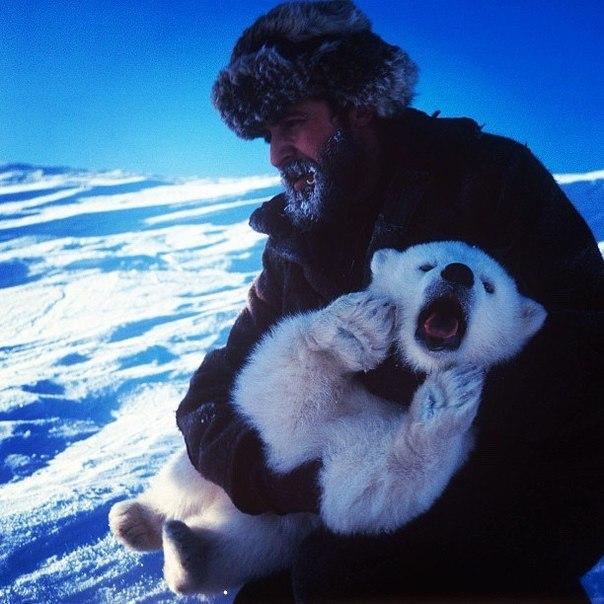 Спасение белого медвежонка из капкана.