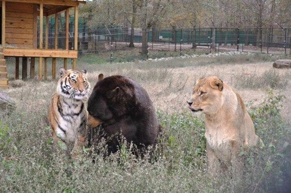 В центре спасения животных «Ноев Ковчег» уже долгое время